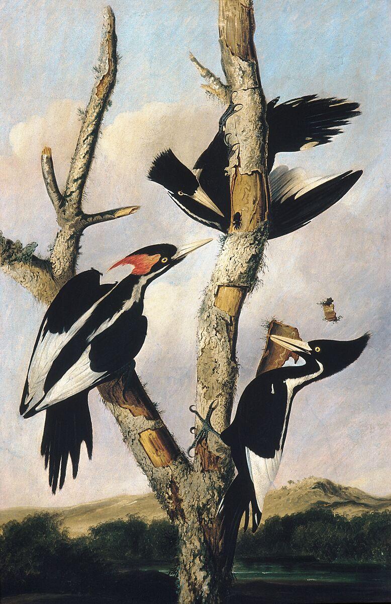 Joseph Bartholomew Kidd | Ivory-billed Woodpeckers | American | The Metropolitan Museum of Art