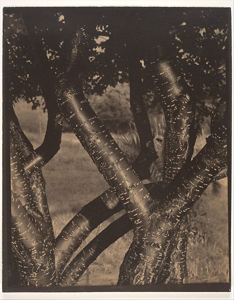 Alfred Stieglitz | The Dancing Trees | The Met