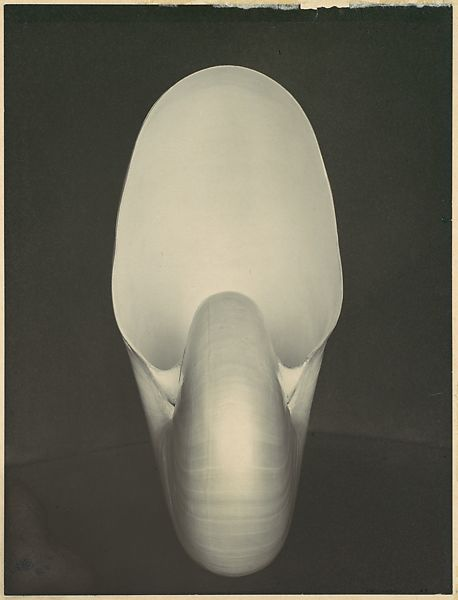 Edward Weston | Nautilus | The Met