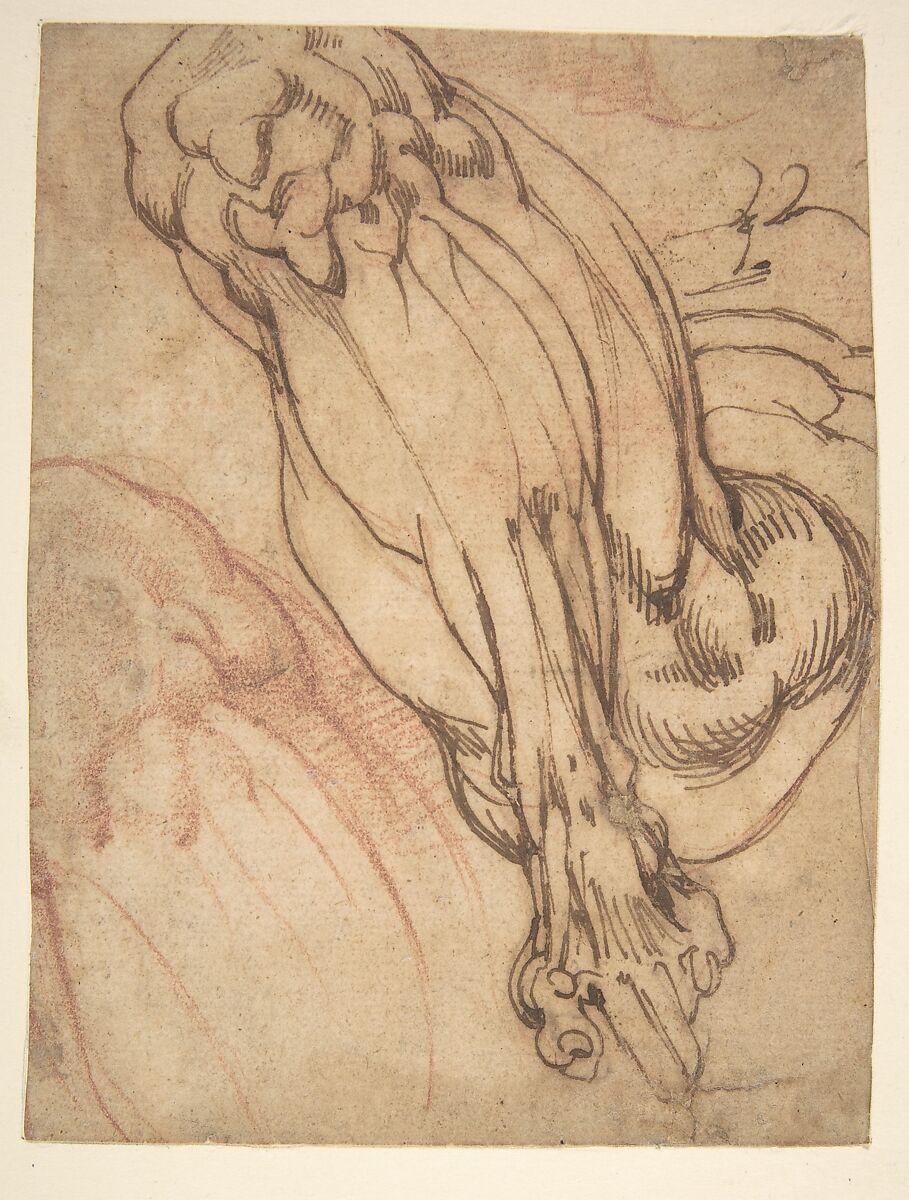 School Of Michelangelo Buonarroti Anatomical Studies Of A Leg