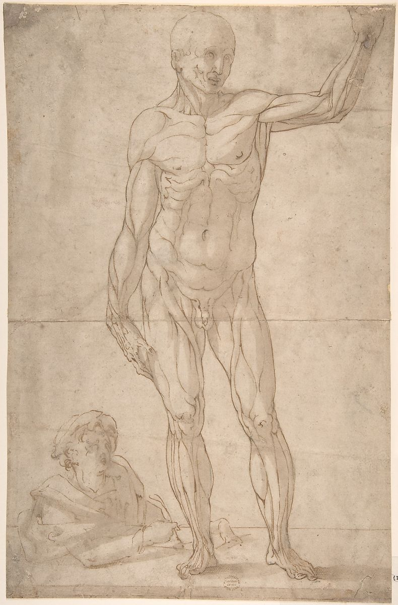 Anonymous Italian 16th To Early 17th Century Study Of Anatomy A