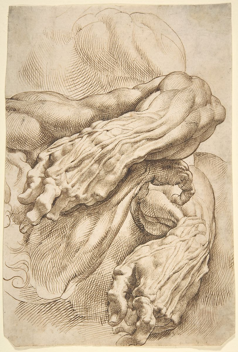 Peter Paul Rubens | Anatomical Studies: a left forearm in two ...