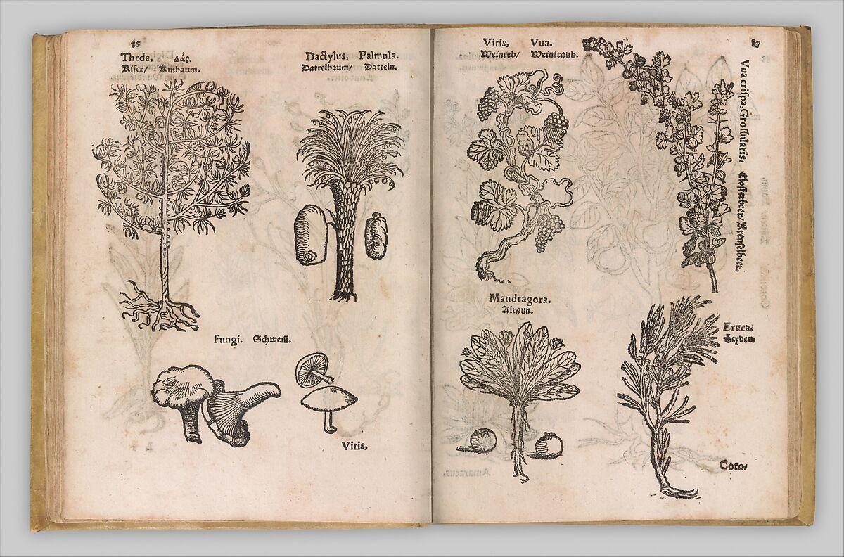 Christian Egenolff | I) Herbarum, Arborum, Fructium, Frumentorum, c. 1540 ... II) De Speciali quarundam plantarum, Frankfurt: Egenolff 1552 | The Met