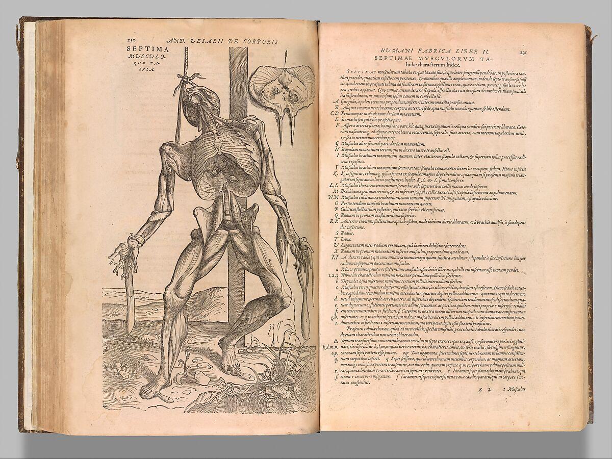 Anatomy In The Renaissance Essay The Metropolitan Museum Of Art Heilbrunn Timeline Of Art History