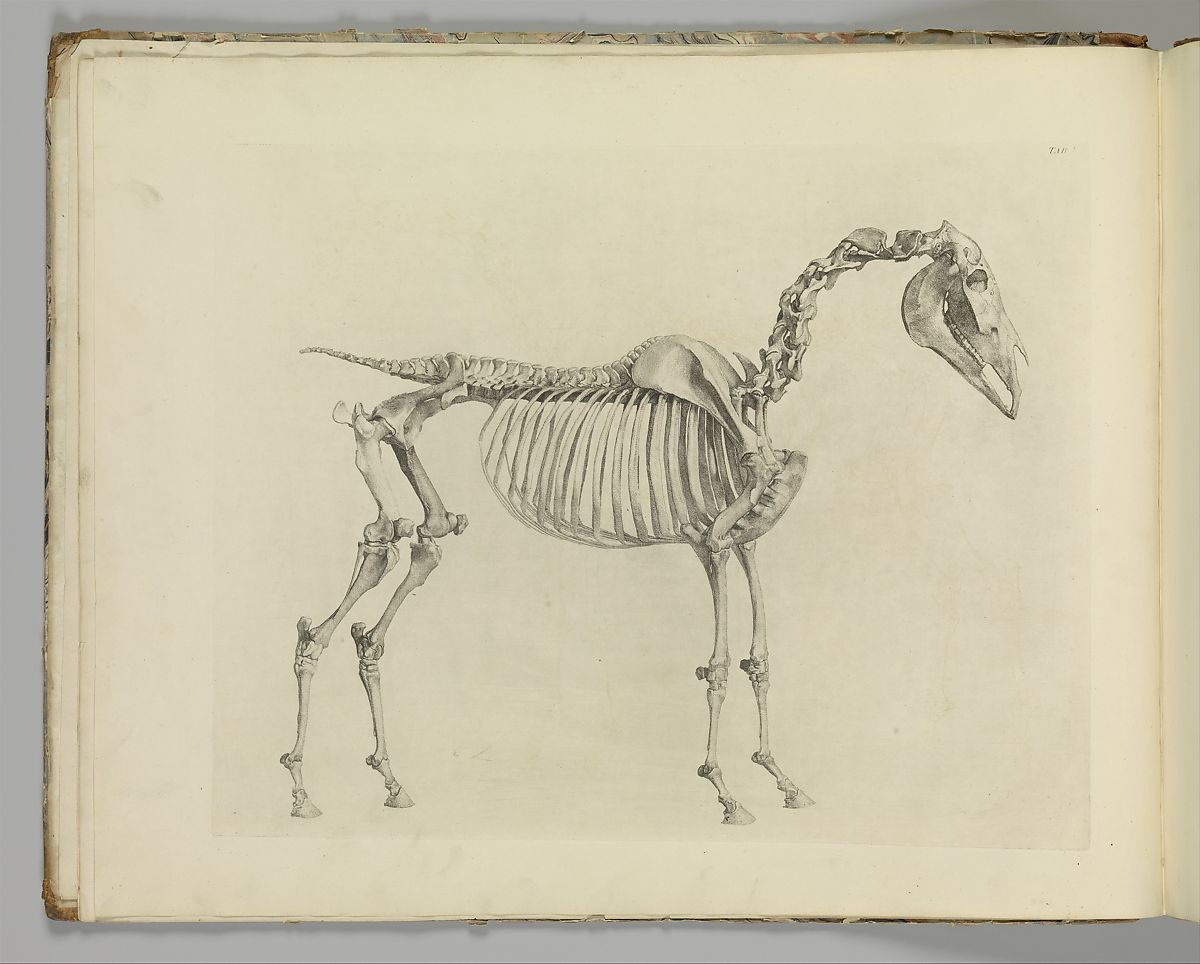 Written And Illustrated By George Stubbs The Anatomy Of The Horse