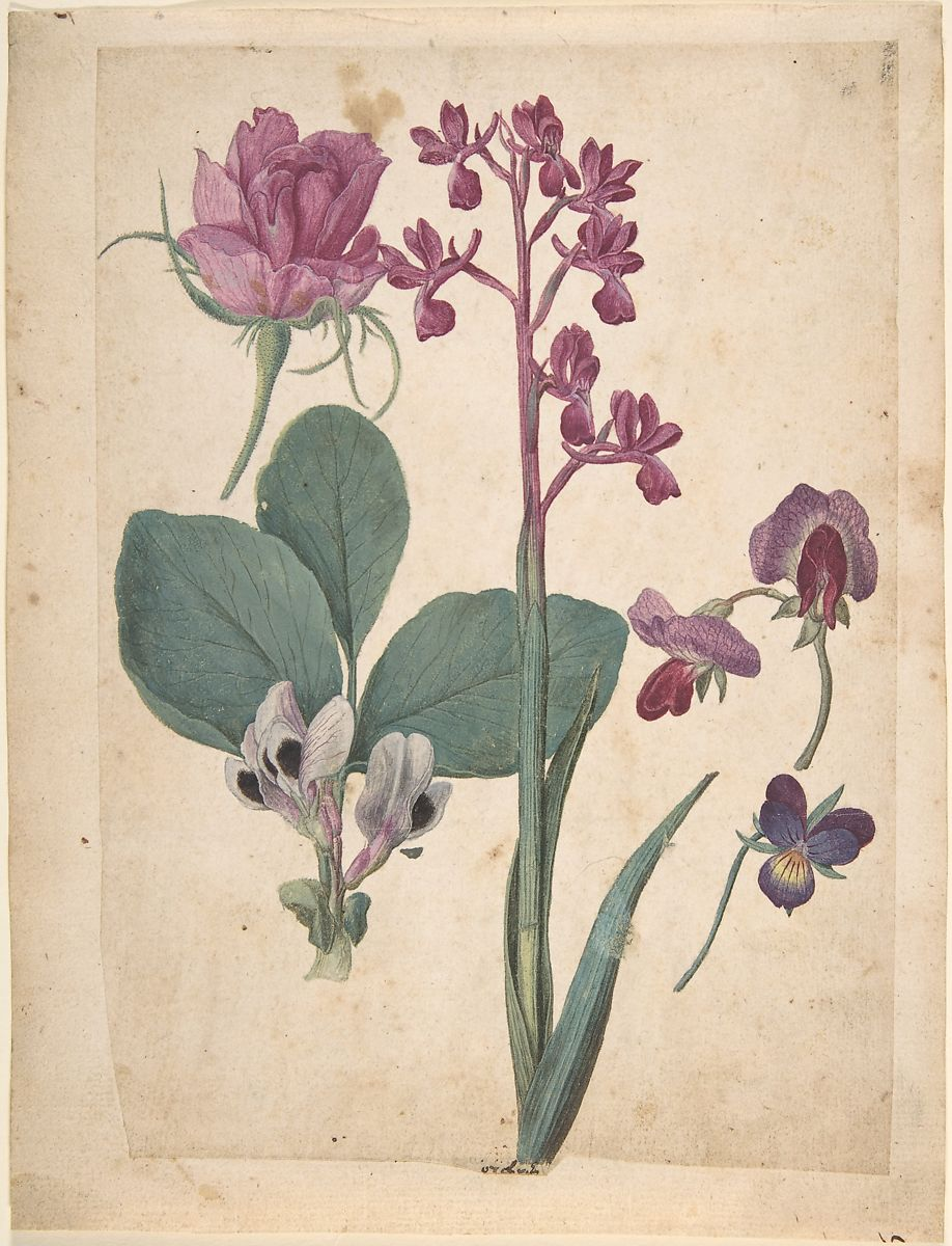 Jacques Le Moyne De Morgues A Sheet Of Studies Of Flowers A Rose A Heartsease A Sweet Pea A Garden Pea And A Lax Flowered Orchid The Metropolitan Museum Of Art