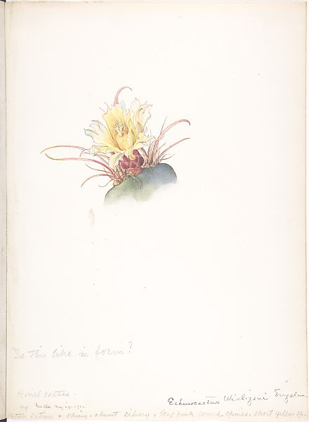 Margaret Neilson Armstrong | Barrel Cactus | The Met