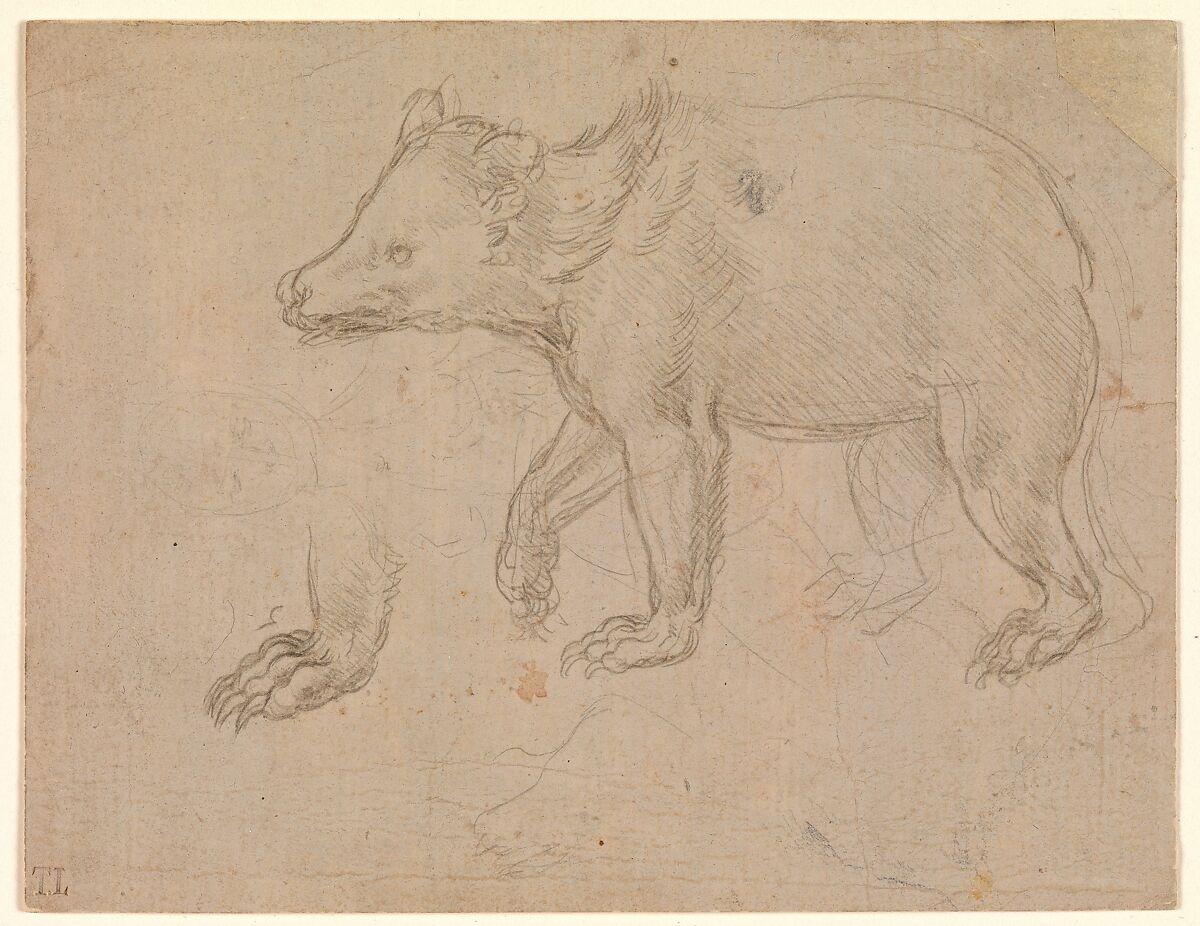 Leonardo D Exhibition : Leonardo da vinci a bear walking the met