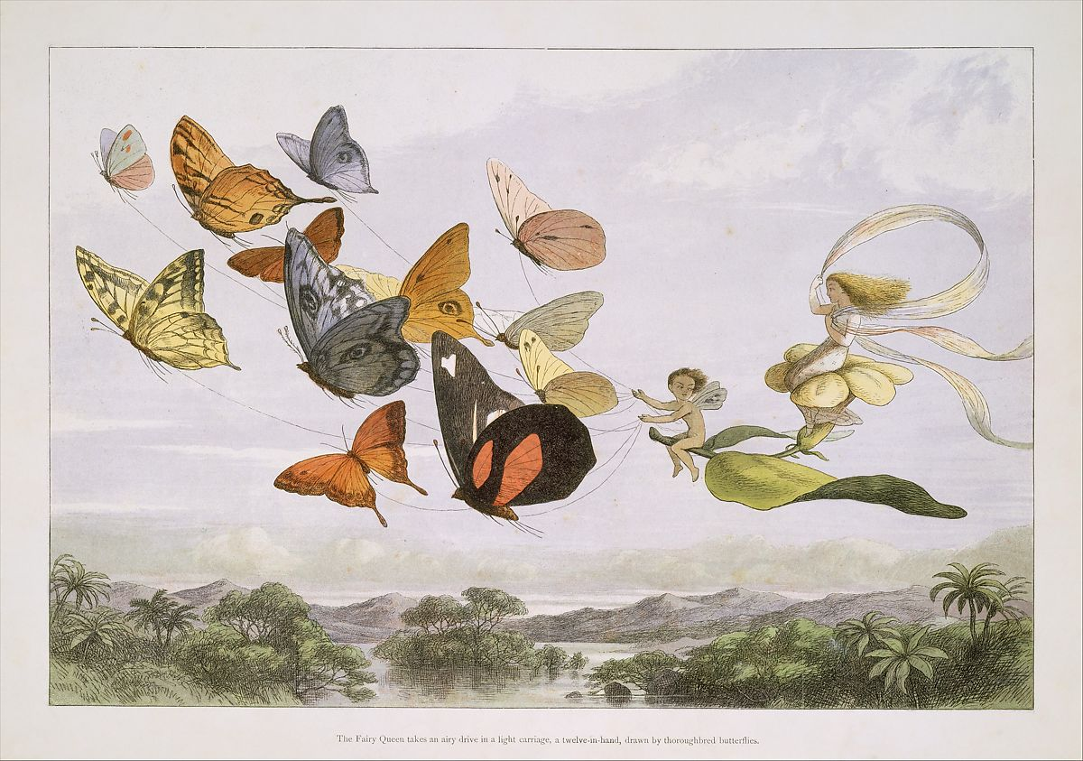 Richard Doyle | The Fairy Queen Takes an Airy Drive in a Light Carriage, a Twelve-in-hand, drawn by Thoroughbred Butterflies | The Metropolitan Museum of Art