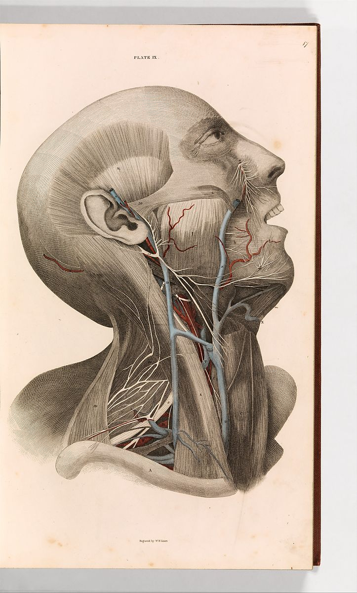 John Lizars A System Of Anatomical Plates Of The Human Body Vol